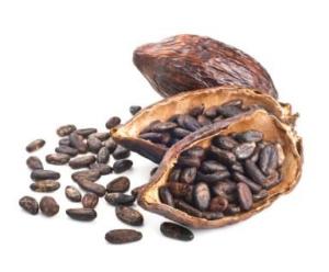 Cocoa seed pod