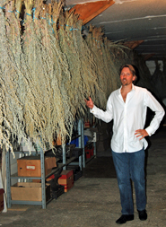 George Rowley with drying wormwood