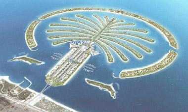 Palm tree in Dubai